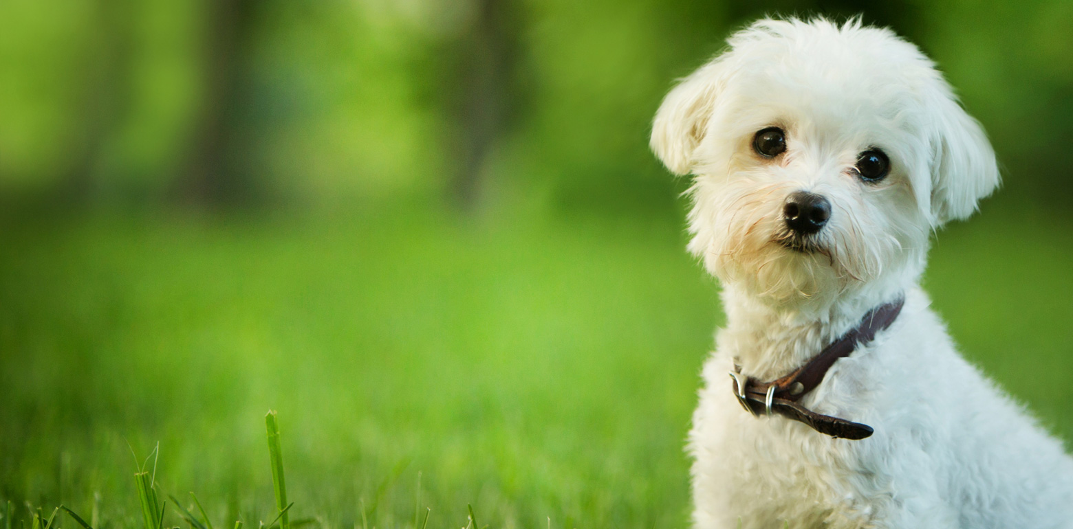 Getting Pet Insurance May Require Some Research