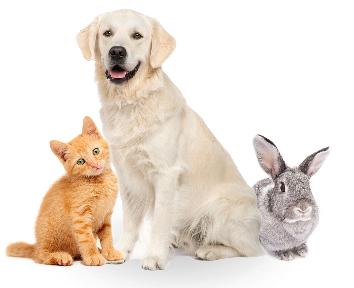 Is Veterinary Pet Insurance Legitimate?