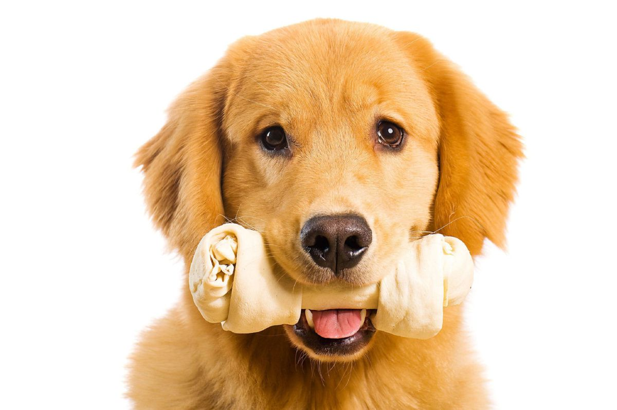 Pet Insurance - Getting the Best Insurance Possible for Your Pet