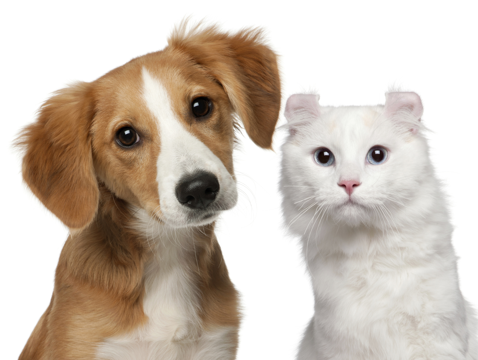Pet Insurance - Is It Right for You?