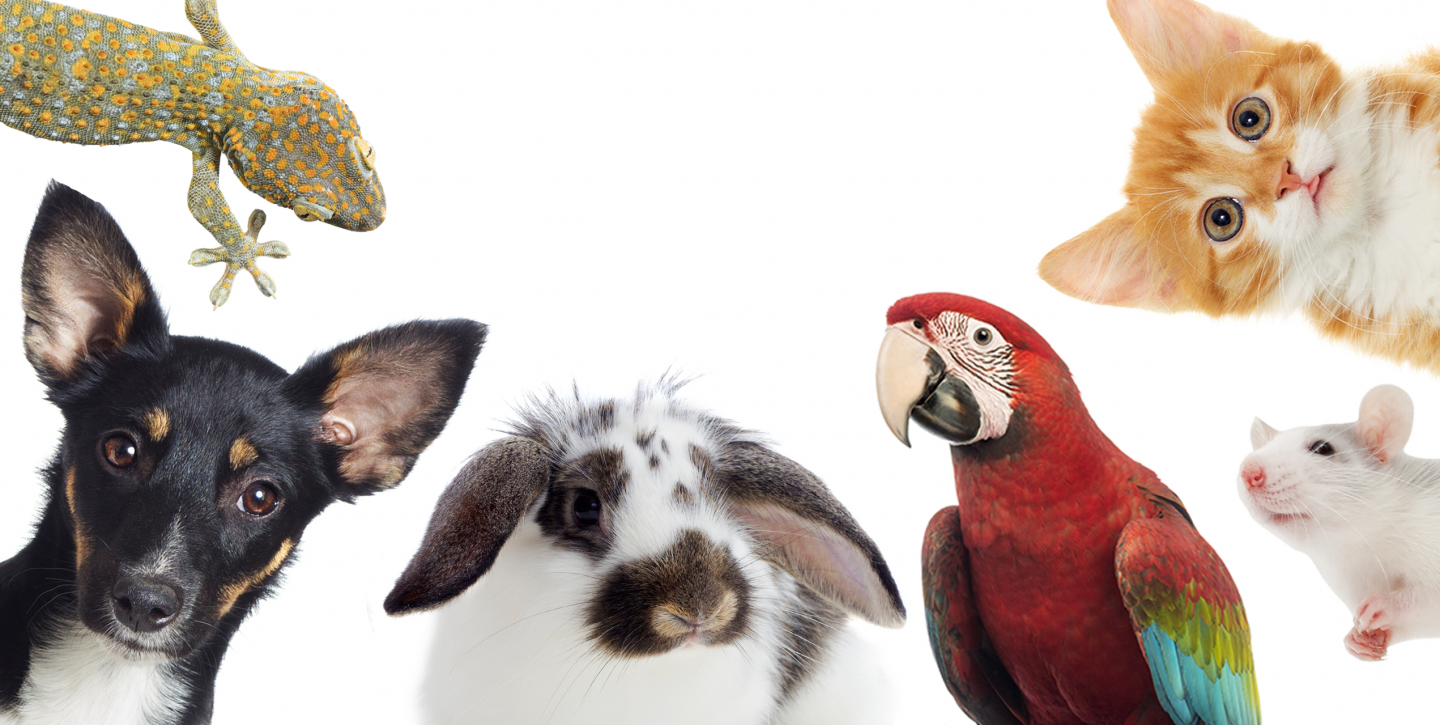 Requirements for Pet Insurance