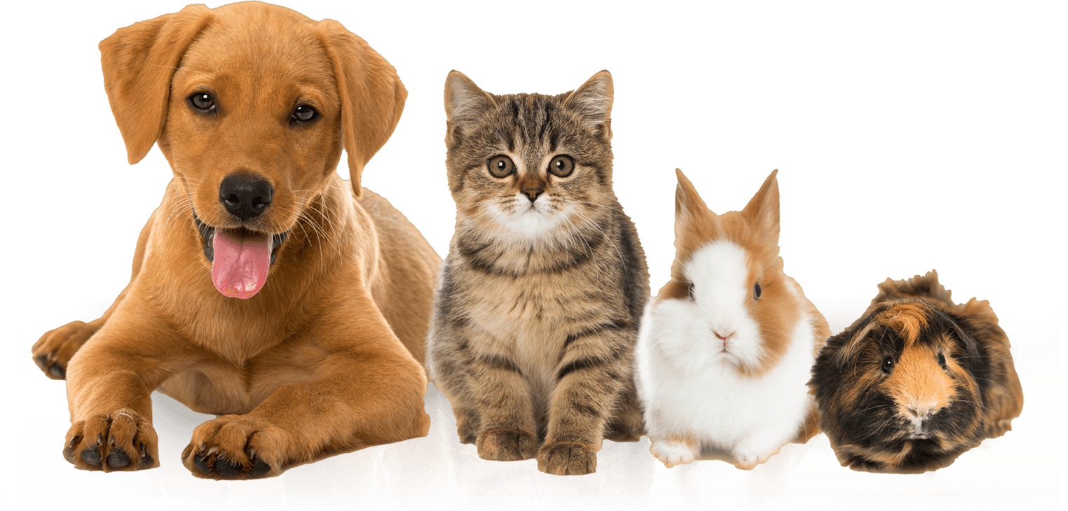 Why You Must Insure Your Pet